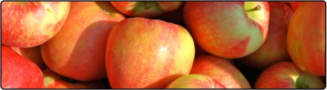 ProduceTibits_Honeycrisp_HoneycrispHeader